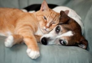 the-cat-dog-relationship-five-sure-fire-ways--L-RsCyrA