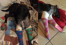 Rex's Bandages
