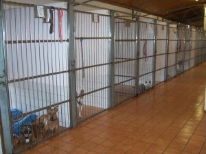 Boardingkennels_vp