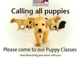 Puppy School is Back!!