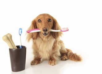 March is Pet Dental Health Month!