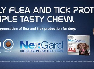Nexgard – The Leading Tick and Flea Prevention